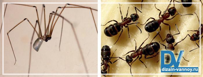 насекомые в ванной комнате фото